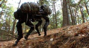 Google купила компанию-разработчика боевых роботов Boston Dynamics